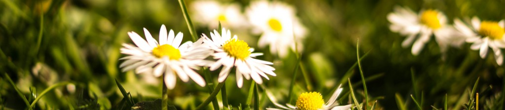 flowers-summer-grass-meadow_1